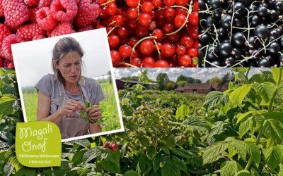 La fête de la fraise à Roncq