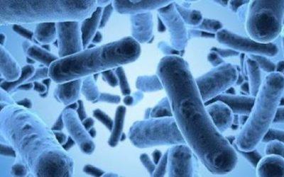 Microbiote, alimentation et santé